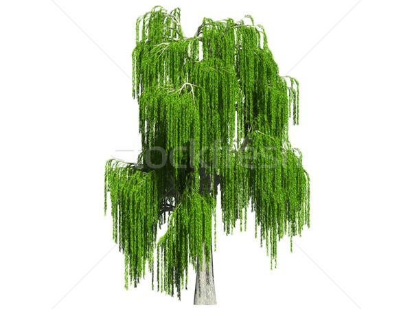 Salgueiro verão branco 3D imagem árvore Foto stock © filipok