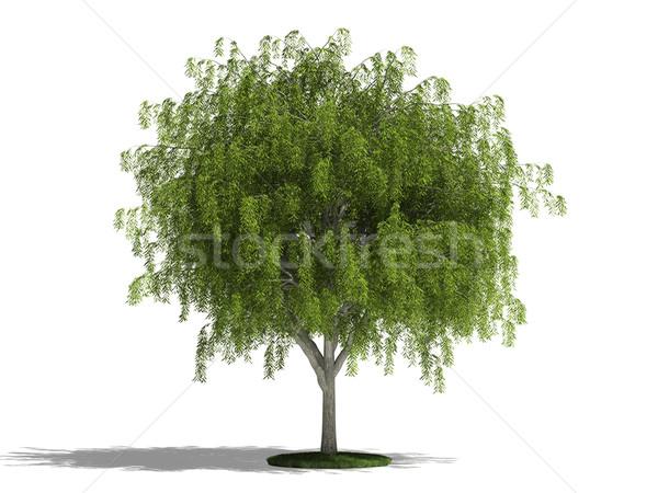 Salgueiro branco 3D imagem árvore Foto stock © filipok