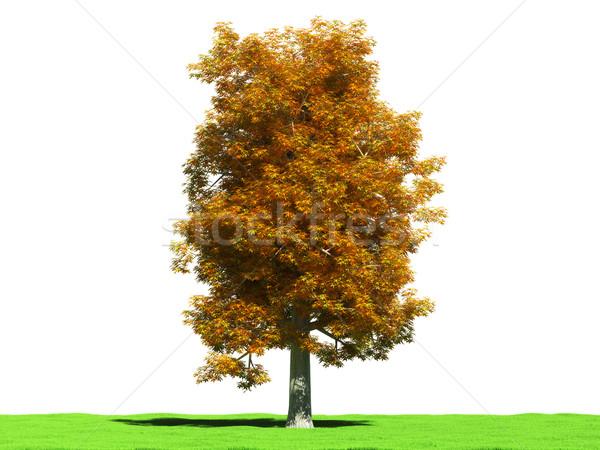 秋 栗 林間の空き地 白 3D 画像 ストックフォト © filipok