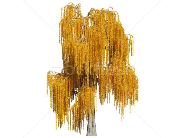 ива осень белый 3D изображение дерево Сток-фото © filipok