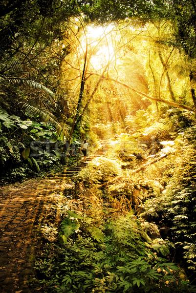 древних джунгли пути женщину каменные лестницы Сток-фото © filmstroem