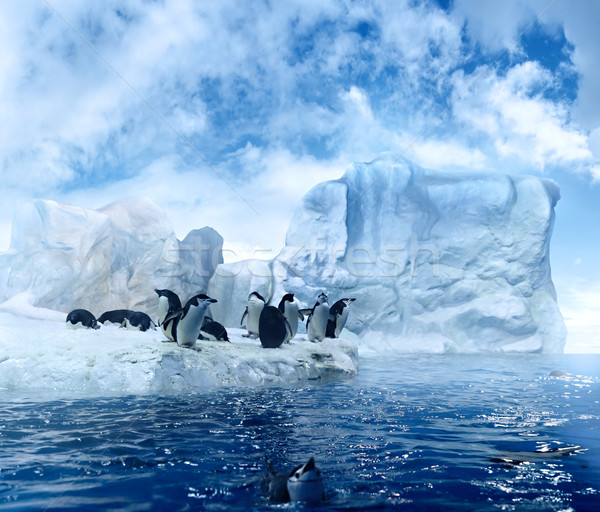 Penguins on ice floe Stock photo © filmstroem