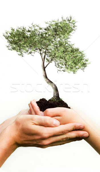 Stock photo: Hands holding tree
