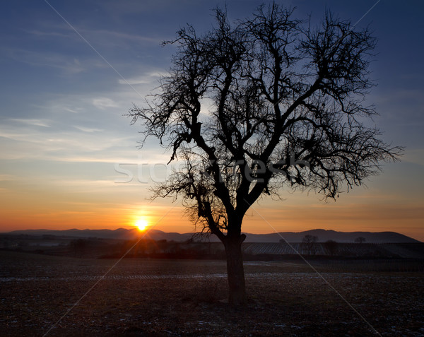 Single tree at sunset, Pfalz, Germany Stock photo © fisfra