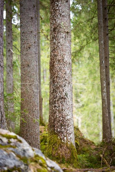 Trees at Lake Hintersee, Berchtesgaden, Germany Stock photo © fisfra