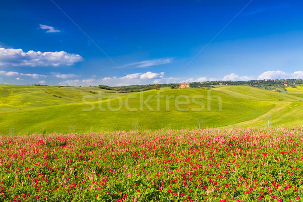 Tuscany landscape in Val d'Orcia with flowers, Pienza, Italy Stock photo © fisfra