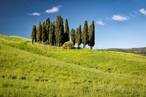 Cyprys wzgórza Toskania Włochy niebo wiosną Zdjęcia stock © fisfra