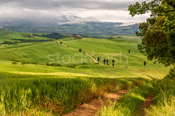 Tuscany hilly landscape near Pienza, Italy Stock photo © fisfra