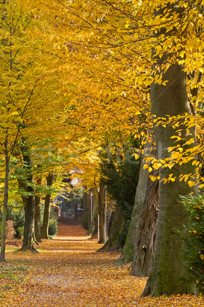 Park in autumn, Karlsruhe, Germany Stock photo © fisfra
