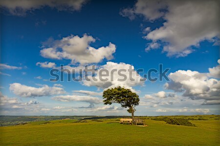 Tree with sun at Cleeve Hill on a windy day, Cotswolds, England Stock photo © fisfra