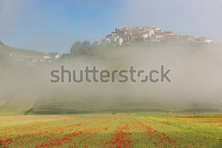 Castelluccio with poppy fields in morning Fog, Umbria, Italy Stock photo © fisfra