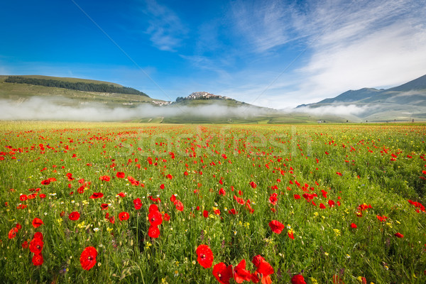 Fioritura at Piano Grande in morning fog, Umbria, Italy  Stock photo © fisfra