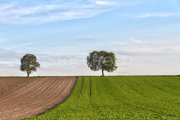 Fields with trees, Pfalz, Germany Stock photo © fisfra