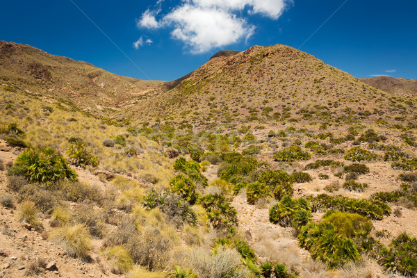 Cabo de Gata National Park, Andalusia, Spain Stock photo © fisfra