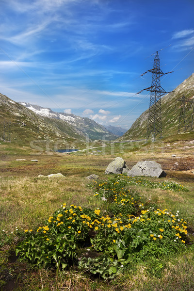 Virágok passz út Alpok Svájc égbolt Stock fotó © fisfra