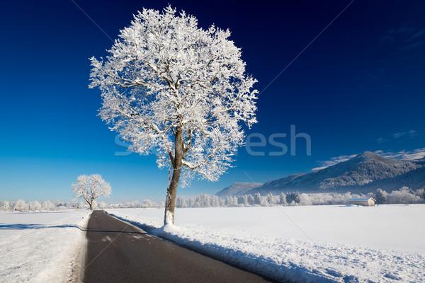 Tél tájkép napos idő Németország erdő hó Stock fotó © fisfra
