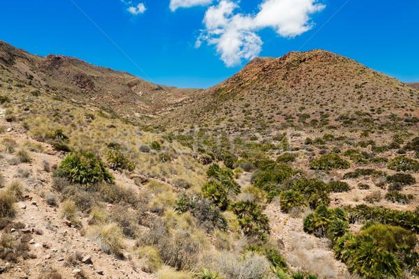 Desert near Cabo del Gata, Almeria, Spain Stock photo © fisfra