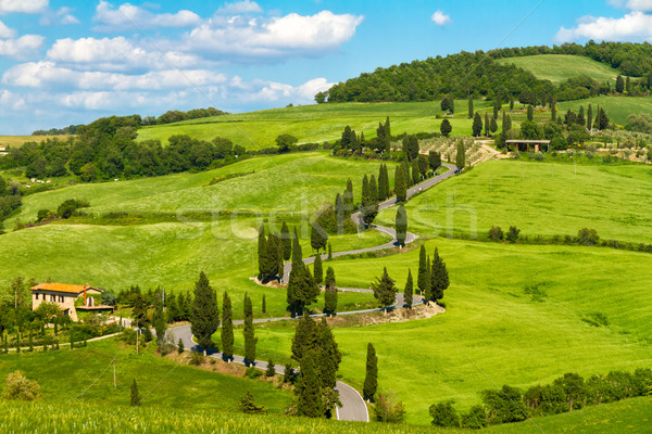 Toscane route arbres Italie maison Photo stock © fisfra