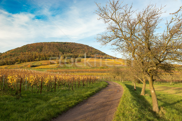 Vineyards in Pfalz at autumn time, Germany Stock photo © fisfra
