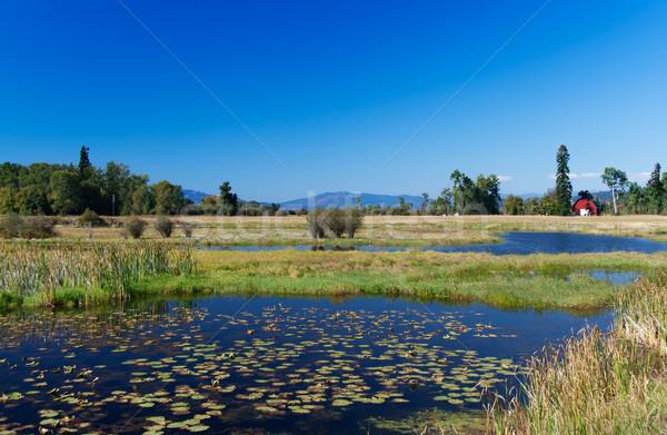 Montana cielo sole natura lago stagno Foto d'archivio © fisfra