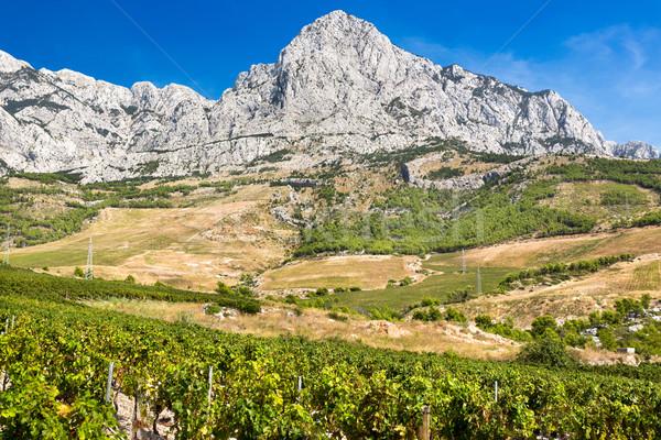 Vineyard with Biokovo near Adriatic Sea, Croatia Stock photo © fisfra