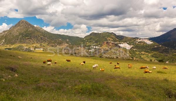 Pueblos Blancos near Casares, Andalusia, Spain Stock photo © fisfra
