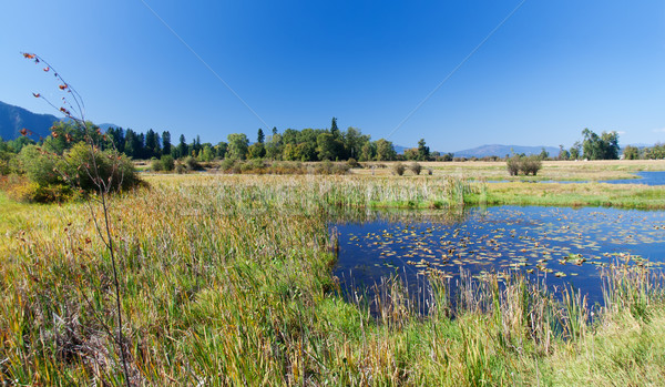Монтана солнце бассейна пруд идиллический Сток-фото © fisfra