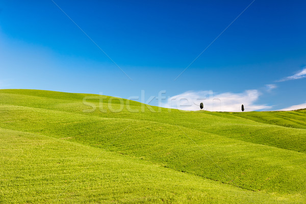 Rolling hills with trees and blue skies, Tuscany, Italy Stock photo © fisfra