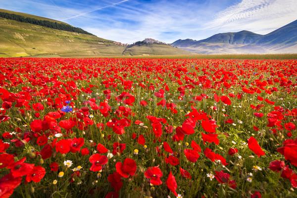 Fioritura at Piano Grande with poppies, Umbria, Italy  Stock photo © fisfra