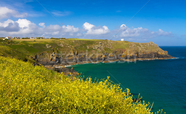 Lézard phare cornwall Angleterre fleurs Photo stock © fisfra