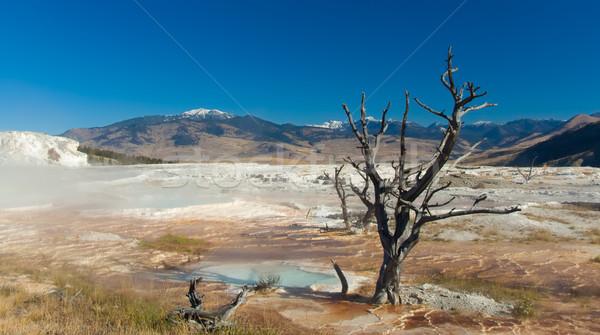 Yellowstone National Park: Mammoth Hot Springs Stock photo © fisfra