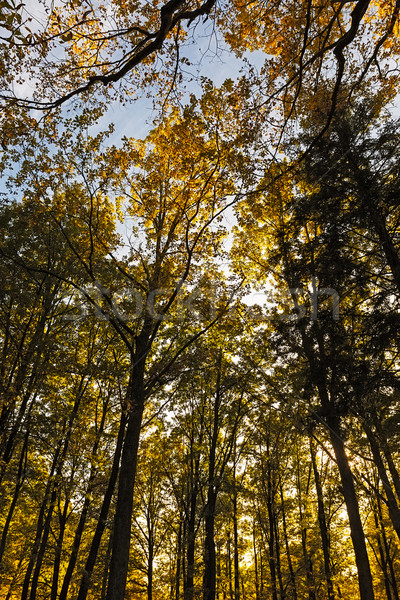 Sonbahar orman Almanya ağaç ahşap doğa Stok fotoğraf © fisfra