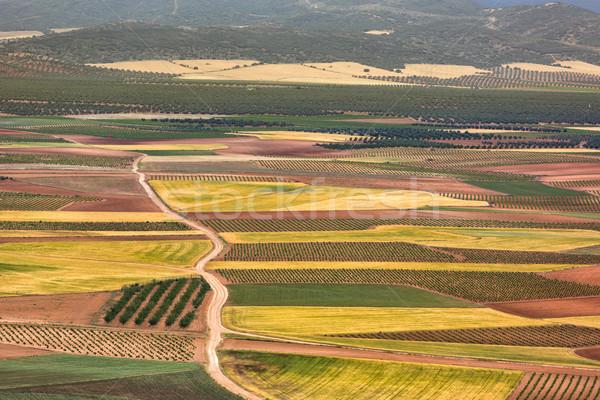 Szín mezők Spanyolország tájkép utca mező Stock fotó © fisfra