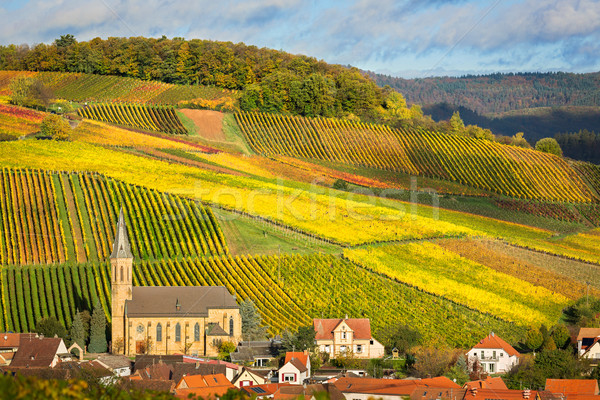 Vineyards with autumn colors, Pfalz, Germany Stock photo © fisfra