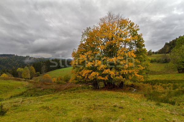 Boom najaar zwarte bos Duitsland natuur Stockfoto © fisfra
