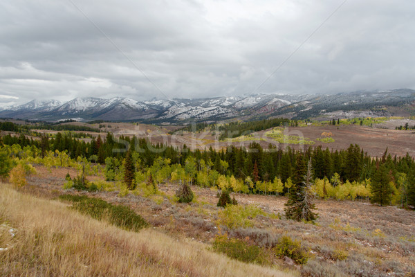 Színes tű fák Wyoming hegyek természet Stock fotó © fisfra