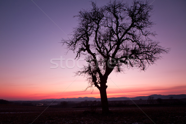 Single tree after sunset with violet skies, Pfalz, Germany Stock photo © fisfra