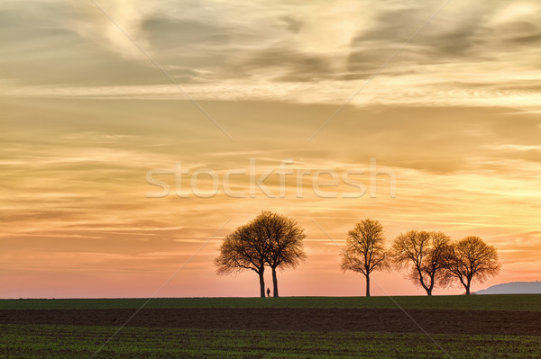 Trees at sunset with walker, Pfalz, Germany Stock photo © fisfra
