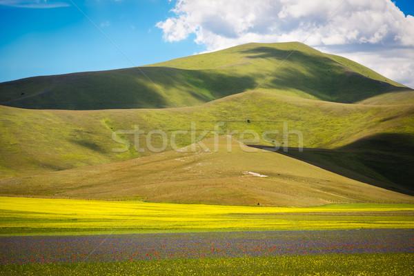 Farmland at Piano Grande, Castelluccio, Umbria, Italy Stock photo © fisfra