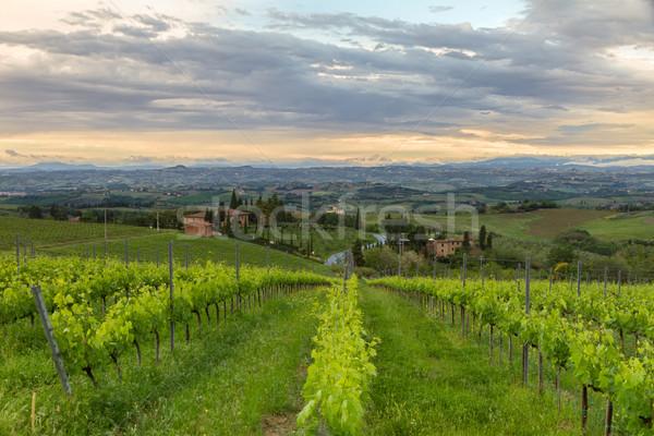 Vineyards in Tuscany at dusk, Italy Stock photo © fisfra