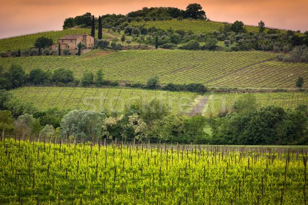 Winnicy Toskania Włochy krajobraz lata zielone Zdjęcia stock © fisfra