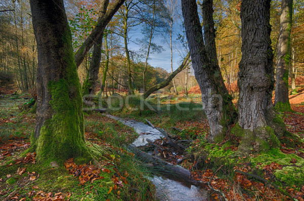 New Forest Stream Stock photo © flotsom