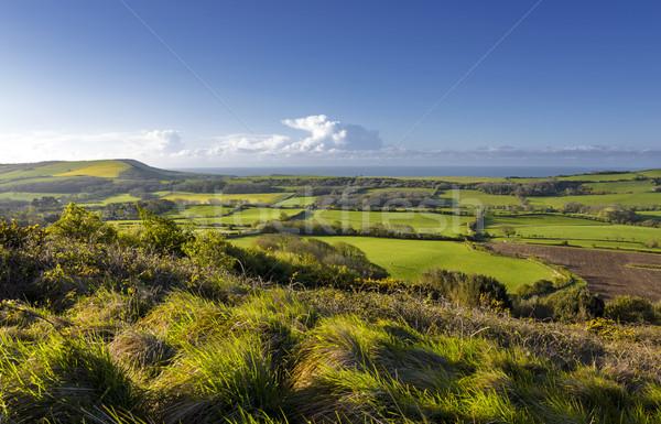 Dorset Countryside Stock photo © flotsom