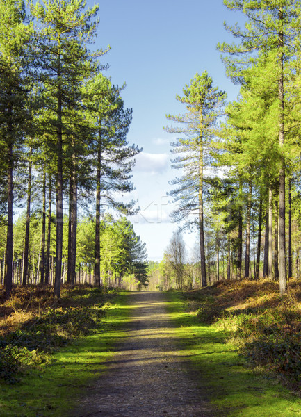 Forest Path Stock photo © flotsom