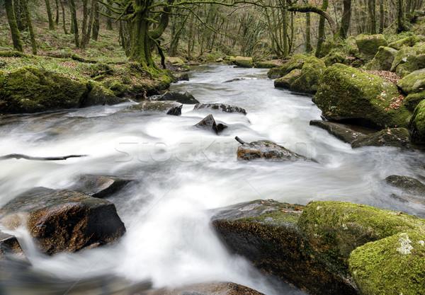 лес воды древних край небе Сток-фото © flotsom