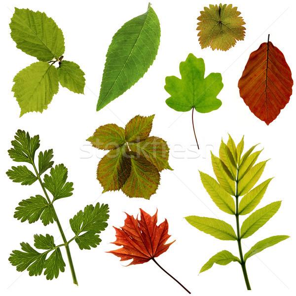 Leaves Stock photo © flotsom