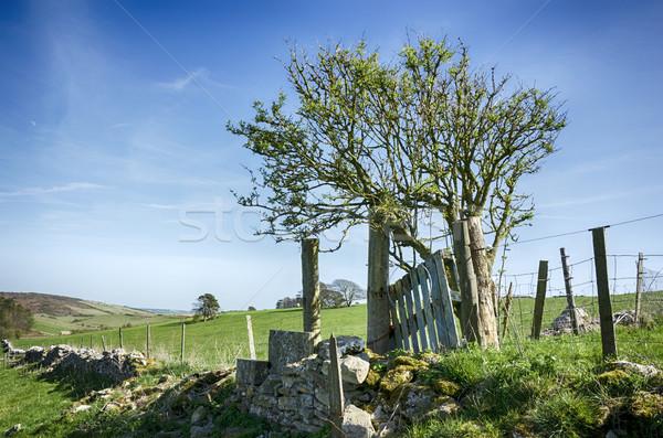Campagne arbre ciel mur bleu clôture Photo stock © flotsom