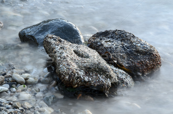 Mistig rotsen zeewier Stockfoto © flotsom