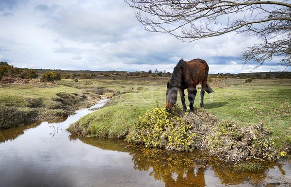 новых лес пони воды парка Сток-фото © flotsom