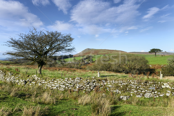 Dartmoor View Stock photo © flotsom